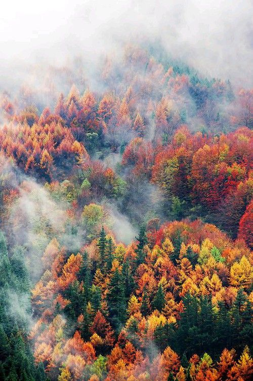 grafika autumn, tree, and forest