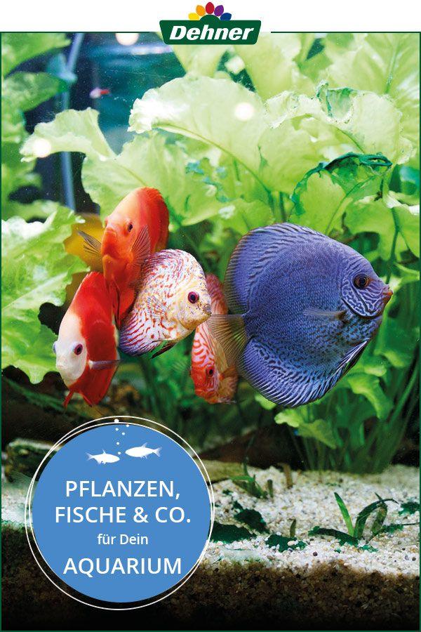 Wasserpflanzen Fische Und Garnelen Fur Dein Aquarium Aquarium Fische Arten Aquarium Fische Aquarium