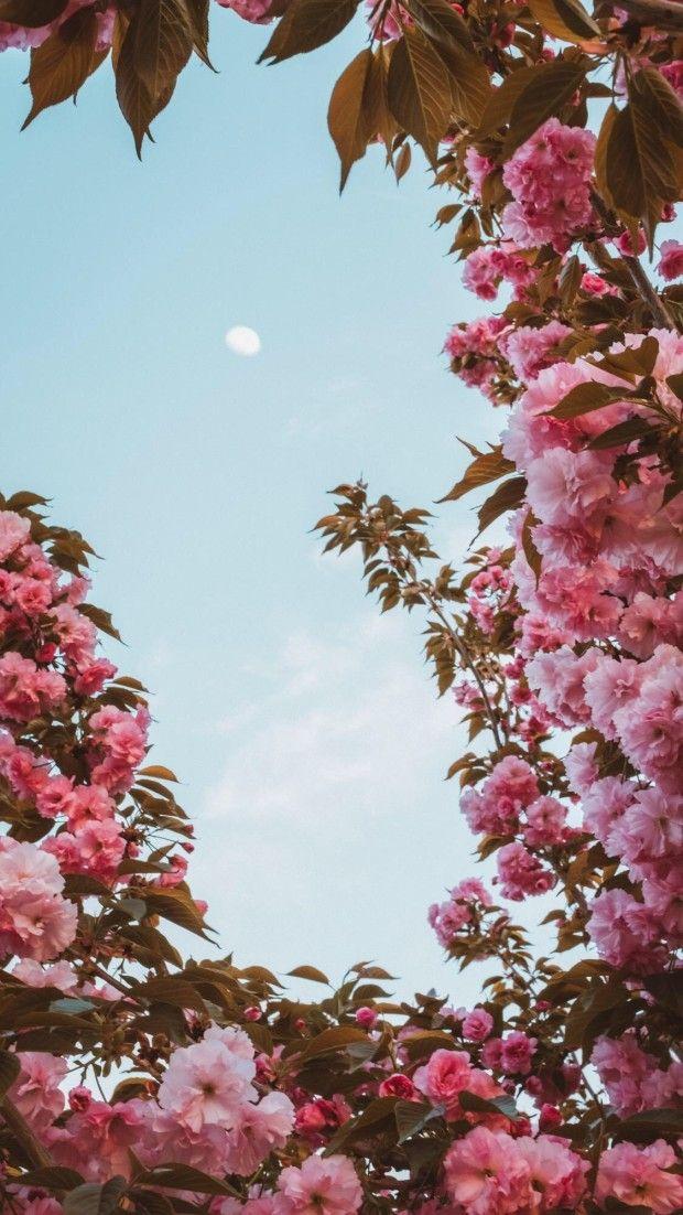 Blooming Pink Flower And Blue Sky Flowergarden Floweraesthetic