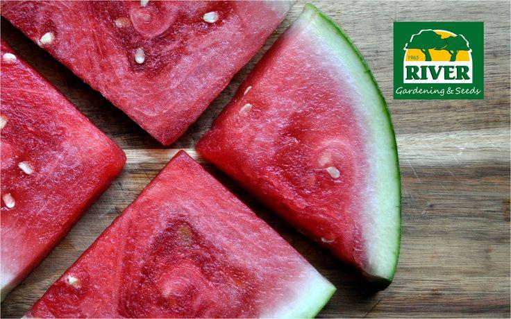 Alimentos sanos y naturales que te ayudarán a tener una vida mejor.