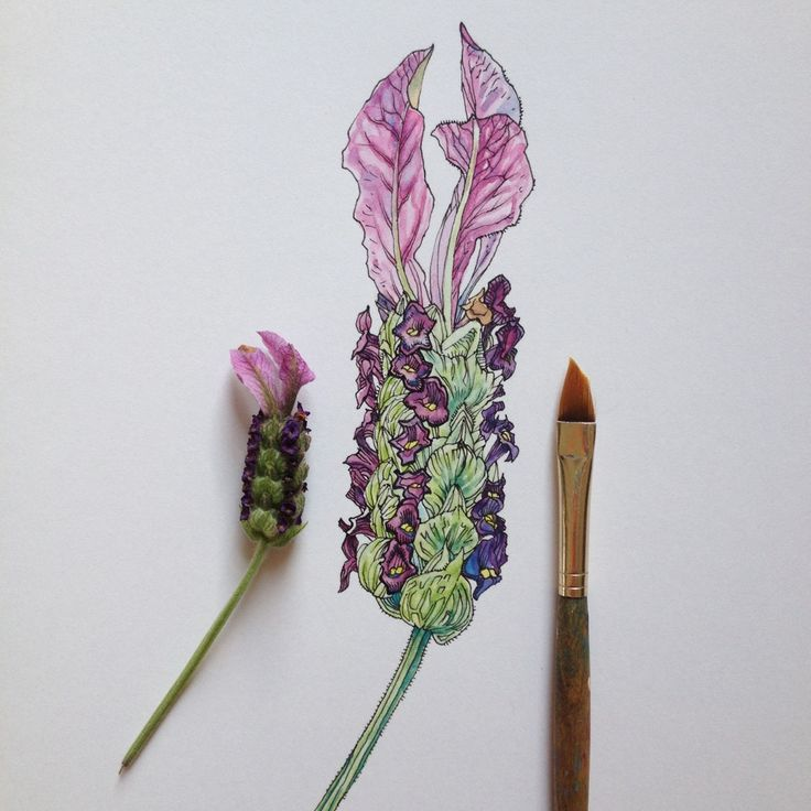 lavender colors by Noel Badges Pugh