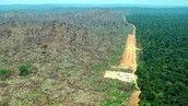 Ontbossing van het Amazonewoud.
