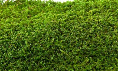 Emerald moss plast