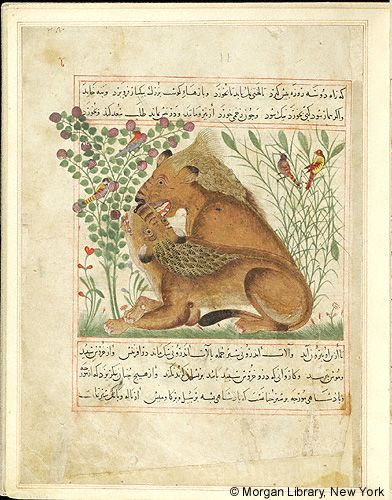"""Seated lion behind reclining lioness, in background, birds in flowering plants, in """"Manāfi˓-i al-ḥayavā"""" (""""The Benefits of Animals""""), fol. 11r, ca. 1297/1300, by Abu Sa'd' Ubayd-Allah ibn Ibrahim, known as Ibn Bakhtishu (d. 1058), Perse, Pierpont Morgan Library MS M.500"""