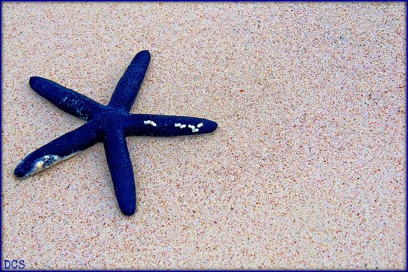 Blue starfish on a beach in Bohol, Philippines. Its simplicity is striking.