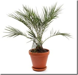 16 Best Images About House Plants As Air Purifiers On