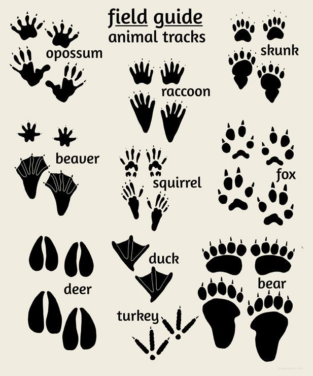 Woodland Animal Tracks Poster | Nursery Wall Art | Alley Kids