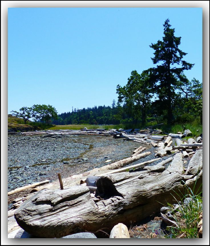 Driftwood debris on one of the beaches a Piper's Lagoon Park, Nanaimo