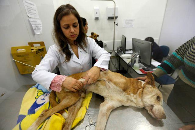 Conheça o primeiro hospital veterinário público do Brasil   Metro Jornal