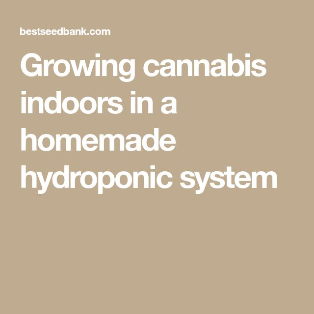 Growing cannabis indoors in a homemade hydroponic system