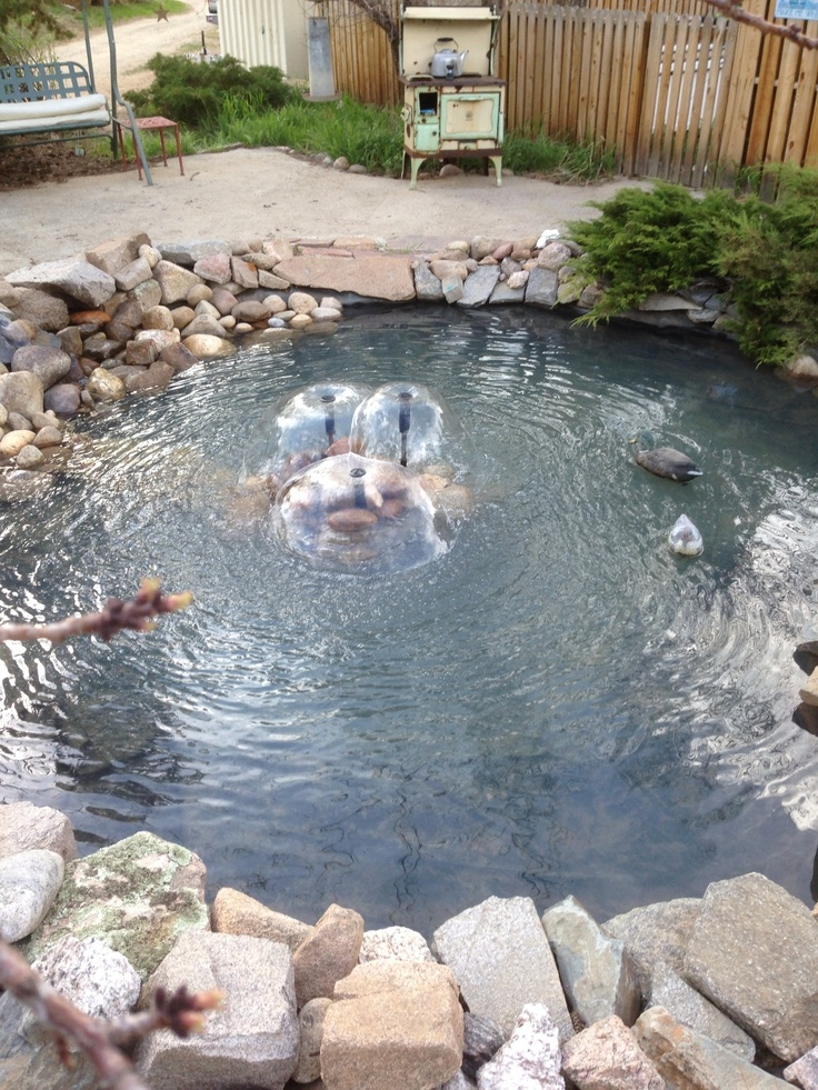 245 best fish ponds and water gardens images on pinterest for Outside pond fish