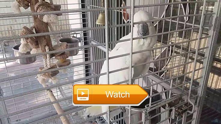 VIDEO FOR CATS AND DOGS  VIDEO FOR CATS AND DOGS  on Pet Lovers