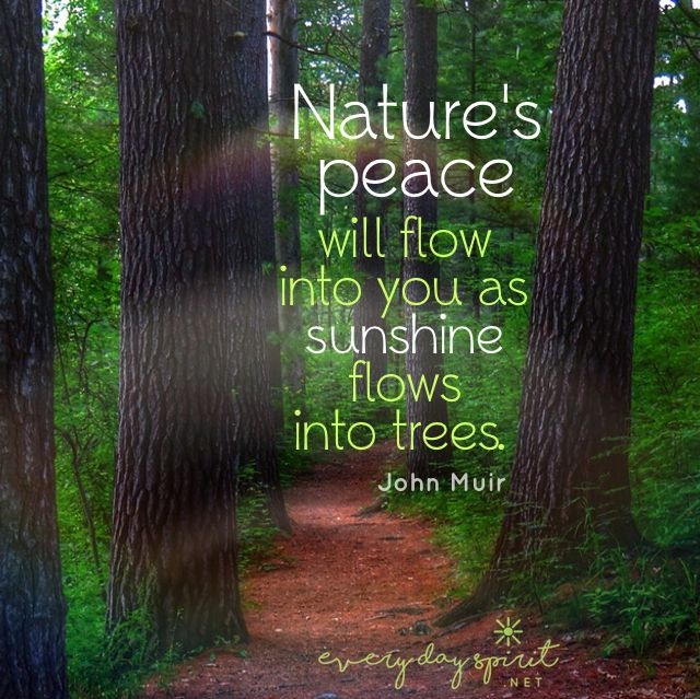Open your branches to the sun! #nature #peace For the app of beautiful wallpapers ~ www.everydayspirit.net xo