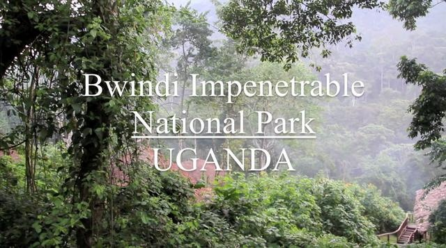 Bwindi Impenetrable National Park by BIKE AFRICA. Tracking the Mountain Gorilla in Uganda's Bwindi Impenetrable National Park.