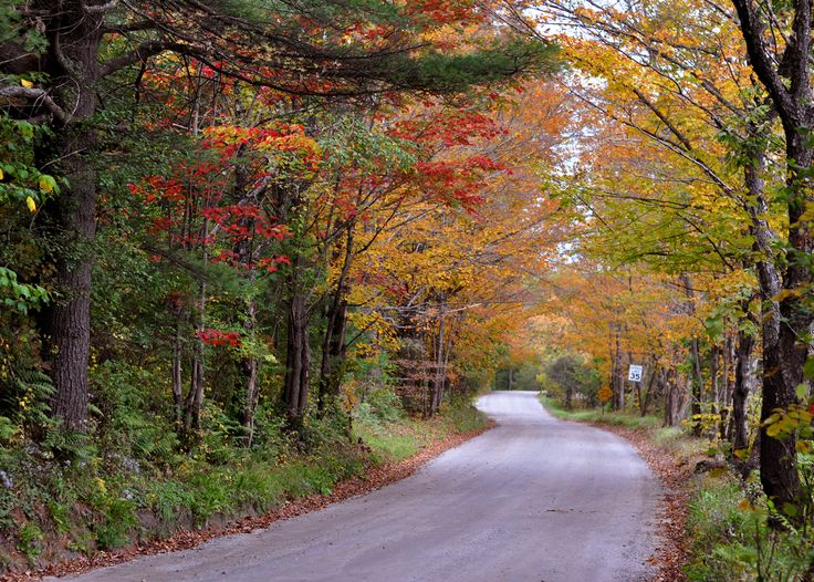A dirt road in Sharon, Vermont.