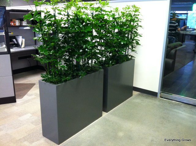 our very popular earth wall product makes a great room divider