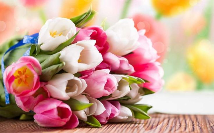 BOUQUET VIVACE CON I TULIPANI - Colorati, semplici e al tempo stesso sobriamente eleganti, i tulipani costituiranno un bouquet fresco e intensamente allegro. Ricordati che secondo il Galateo sull'abito del padre della sposa dovrebbe essere appuntato un garofano bianco o una gardenia. #whiteweddingitaly #bouquetTulipani #tulipani #bouquet