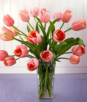French tulips.