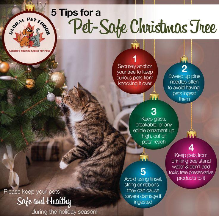 7 best Christmas and Golden Retrievers images on Pinterest Golden