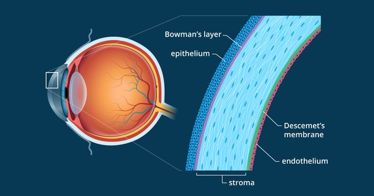 Cornea of the Eye - Definition and Detailed Illustration
