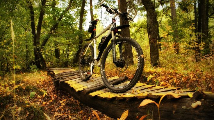 Nature Forest Walking in the woods mountain bike good day!