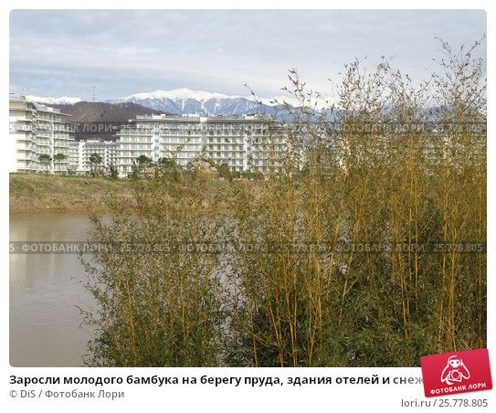 Заросли молодого бамбука на берегу пруда, здания отелей и снежные горы на горизонте © DiS / Фотобанк Лори