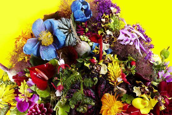Jardins des fleurs aoyama tokyo pretty petals pinterest for Fleuriste le jardin des fleurs