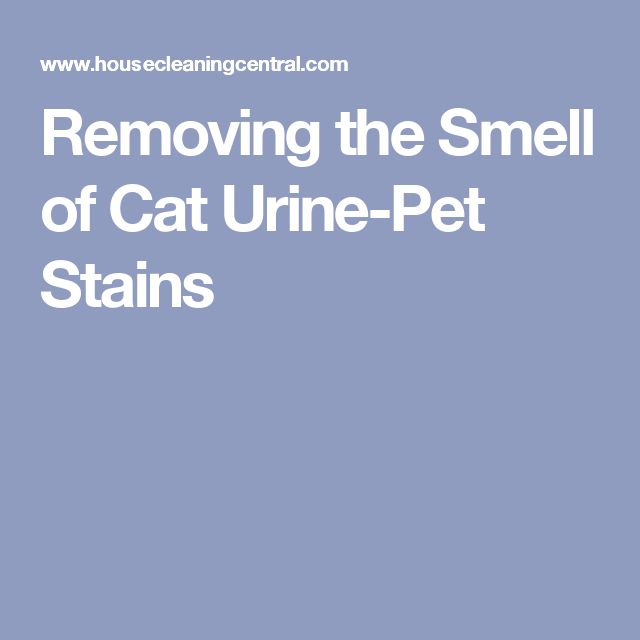 Removing The Smell Of Cat Urine Pet Stains Cleaning