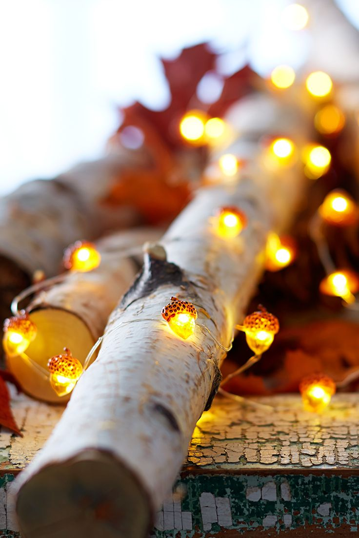 Acorn fairy lights. Just so gorgeous for an Autumn evening. xx