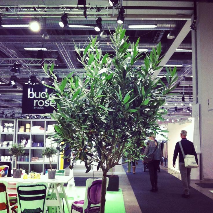 Olive trees feels like home!
