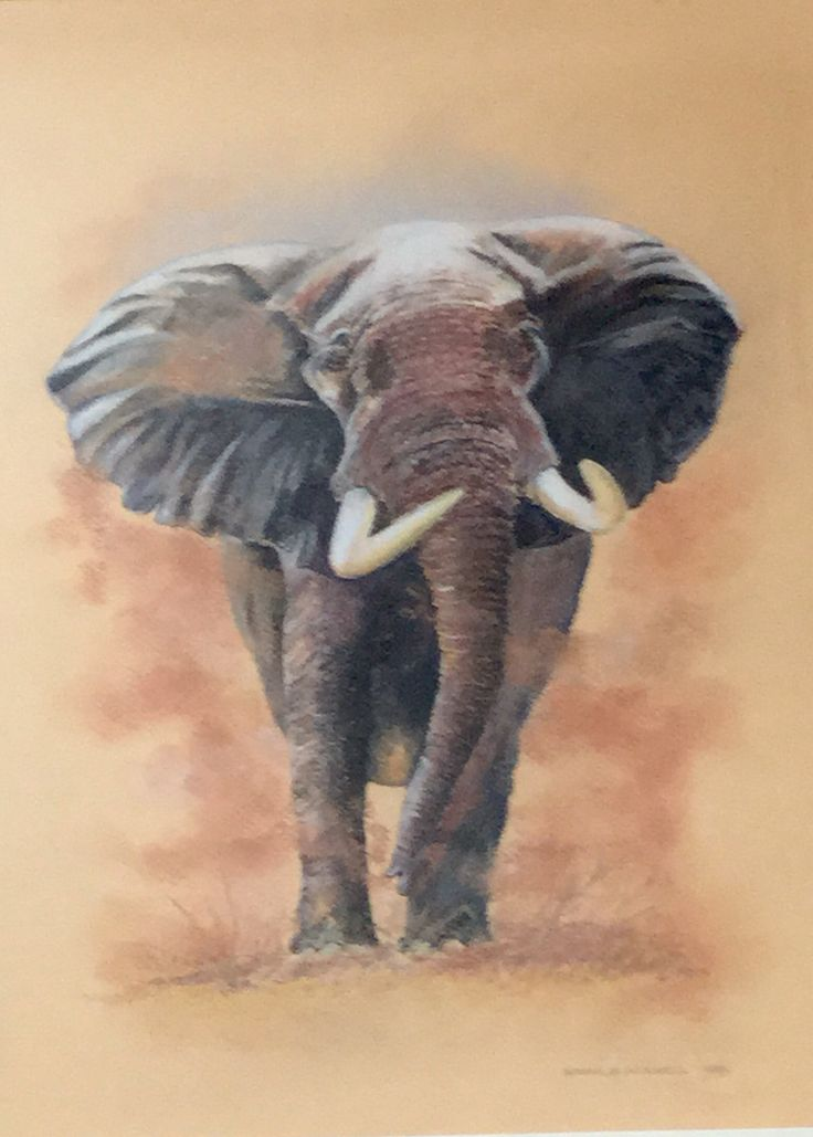 """""""Tusker"""". Pastel on Canson paper"""