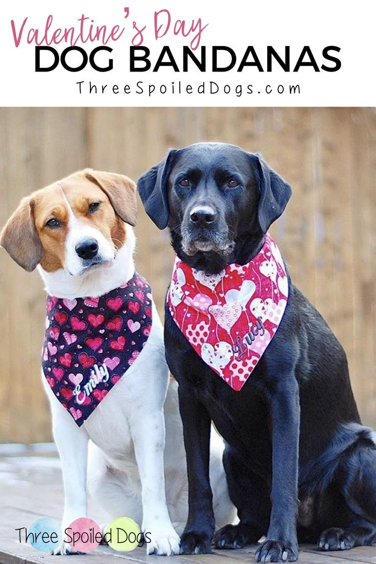 Personalized Dog Bandanas Bow Ties For Your Fabulous Furbaby We