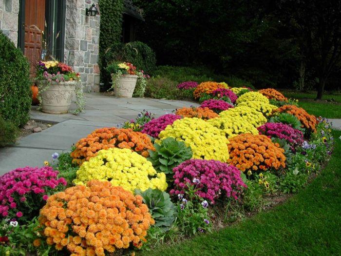 chrysanthemen garten ideen herbstpflanzen gartenweg hauseingang