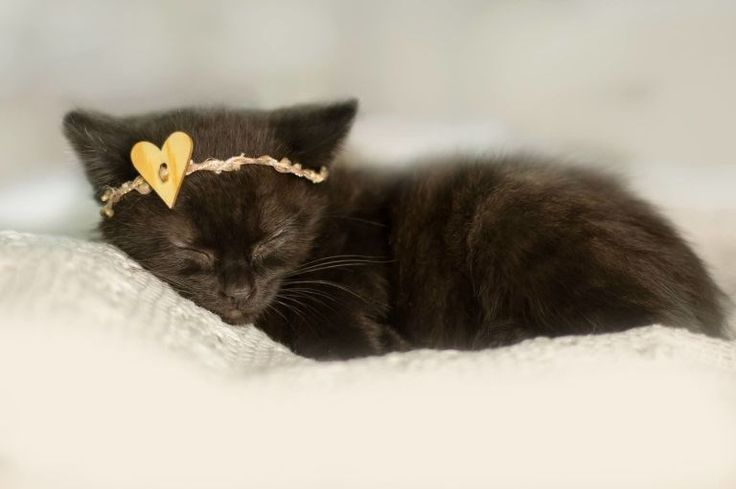 An Amazing Newborn Kitten Photo Shoot