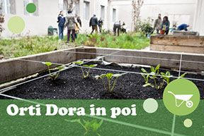 orti Dora in poi Parco Dora Torino Green Lab - Sharing Learning and Caring Parco Dora - Social Gardening -