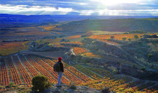 More on Rioja region