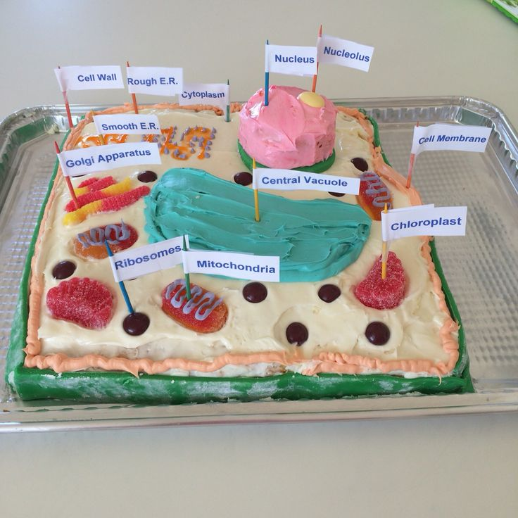Animal Cell Labeled Cake