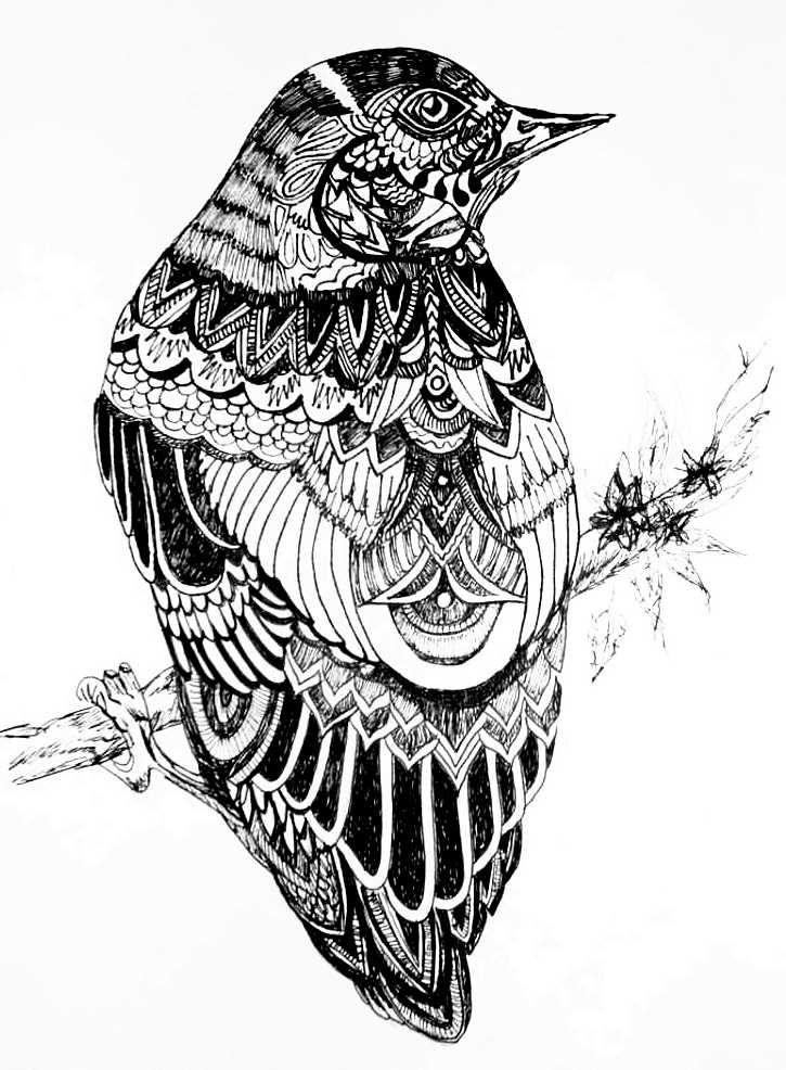 Patterned bird drawing in black fineliner by Meg Traynier