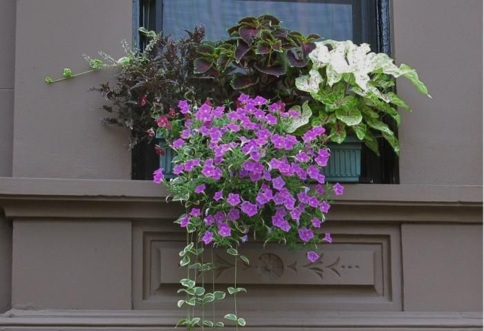 Container Gardens: 5 Tips for a Perfect Window Box