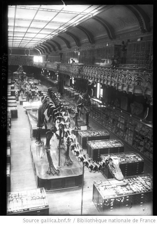 [Le Diplodocus du Museum d'histoire naturelle de Paris] : [photographie de presse] / [Agence Rol] - 1