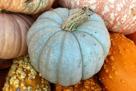 9 Heirloom Pumpkin Varieties We Love for Fall Queensland Blue