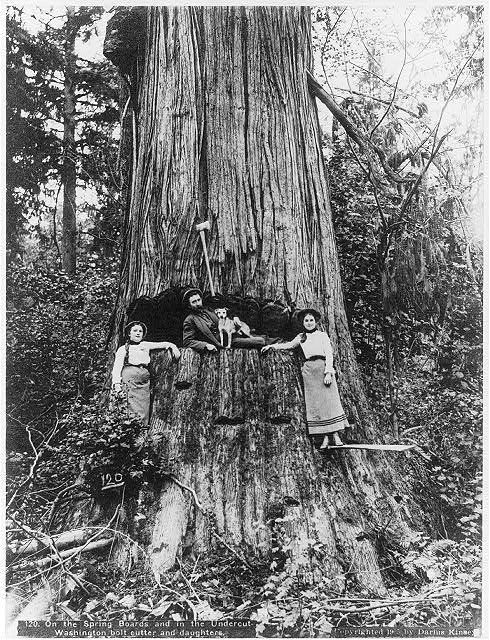 Best 68 Best Images About Lumberjacks And Loggers Of The 400 x 300