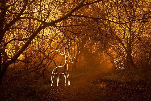 Light Harted (Reindeer Light Painting), Hertfordshire by flatworldsedge, via Flickr