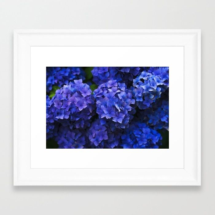 Hortensia Framed Art Print by Mixed Imagery | Society6