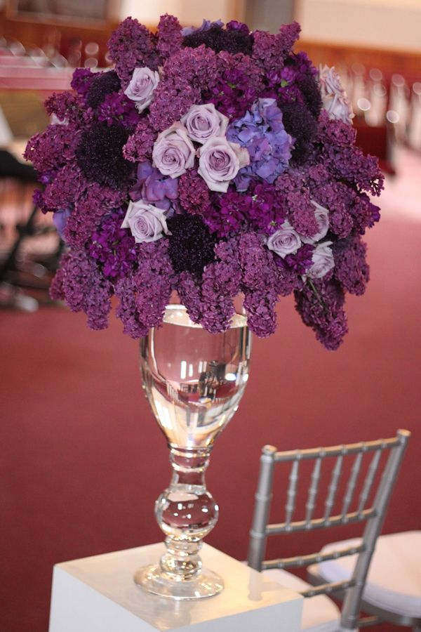 Best images about purple flowers on pinterest