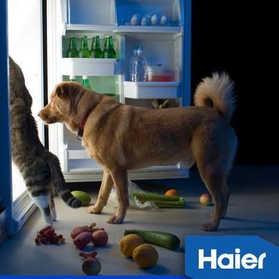 ...Νυχτερινές επιδρομές στο ψυγείο! #HaierGR #TropoZois #Pets