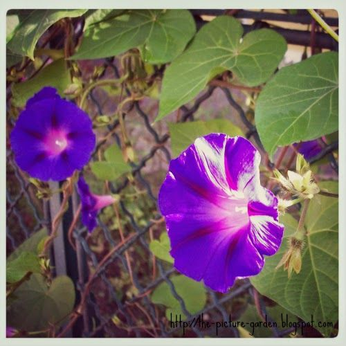 The Picture Garden: Project 365 - Day 265