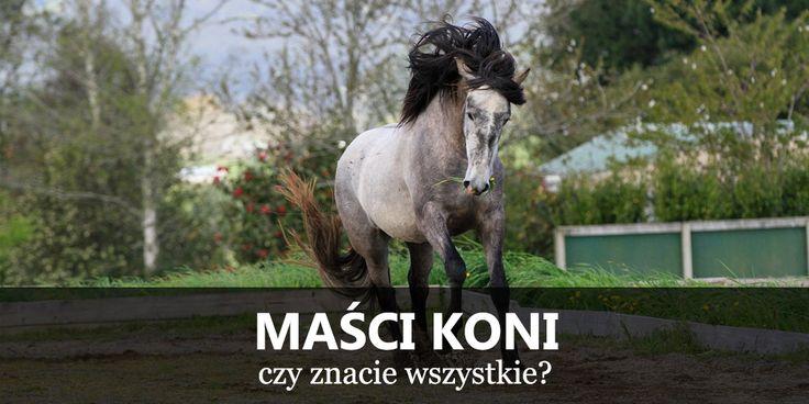 Maści koni, umaszczenie koni, wzory koni  https://www.equishop.com/pl/blog/masci-koni-umaszczenie-koni-n136