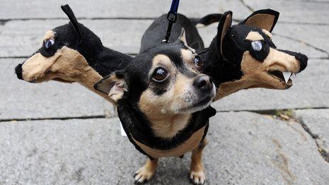 Halloween – Auch Hunde feiern in irren Kostümen mit