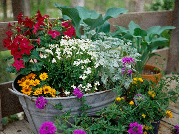 I just love the old washtubs !!!